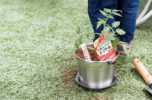 浜町マルシェ「トマトの苗の植樹会」レポート