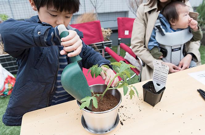 トマトの苗の植樹会